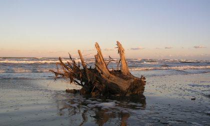 Mareggiate e maltempo: i cittadini potranno raccogliere il legname sulla spiaggia