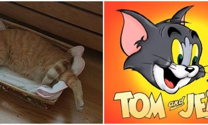 "UN ""TOM & JERRY"" MADE IN SANREMO CON PROTAGONISTA IL GATTO CAMILLO/ VIDEO"