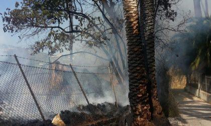Incendio nel terreno accanto ai Giardini Winter di Bordighera, a rischio il palmeto
