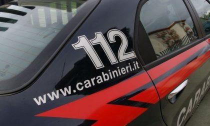 Sanremo: carabinieri scoprono allevamento con cani in precarie condizioni