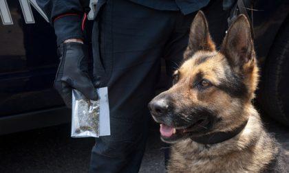 Cani antidroga alla Scuola Edile e all'Agraria Ruffini-Aicardi di Sanremo