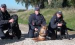 I consigli della Polizia di Stato per proteggere gli animali durante il Capodanno