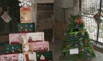 Oggi a Dolcedo la premiazione degli alberi di Natale