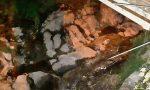 Sanremo: è un solvente la misteriosa sostanza trovata nel rio San Lorenzo