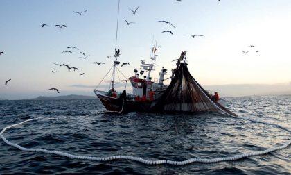 """""""I ristoranti chiusi condizionano il settore ittico ligure"""""""