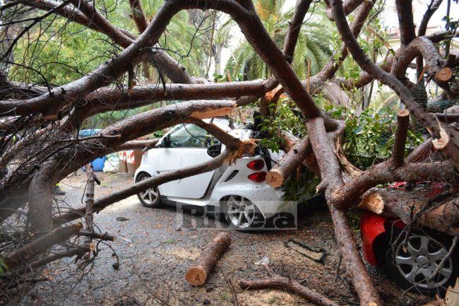 Grosso pino marittimo crolla su due auto a Sanremo