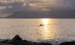 Avvistato un branco di delfini a pochi metri dalla riva a Ventimiglia. Video