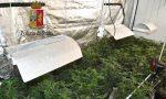 Muore a 35 anni intossicato da monossido di carbonio, in casa una piantagione di marijuana