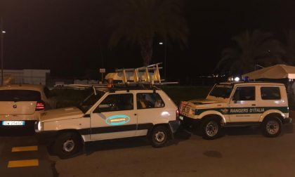Vespa velutina: intervento congiunto di Rangers e Protezione Civile