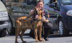Addio Gringo: morto il cane molecolare che cercò Paola Gambino
