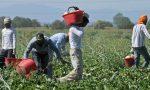 Tenuta agricola di Taggia acquistata per far lavorare immigrati e giovani svantaggiati
