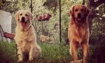 Appello urgente per due cani scomparsi