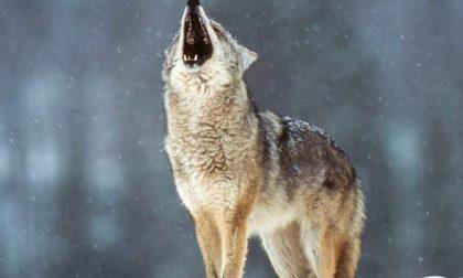 Fine settimana sulle tracce del lupo nell'entroterra
