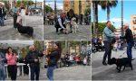 Esposizione cinofila a San Bartolomeo, la classifica dei cani premiati. Il più bello è Josè