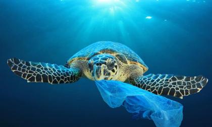 Imperia al Centro lancia la campagna plastic free