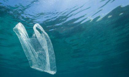 Tutto pronto per la giornata di raccolta rifiuti in mare, ma Plastic Free si dissocia