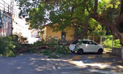 Crolla il ramo di un albero presa di striscio un'auto parcheggiata