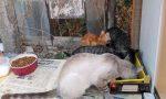 Autopsia sui gatti morti: è avvelenamento, caccia al killer seriale