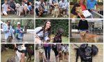 Si è aperto il Bordighera Dog Show: prima esposizione canina