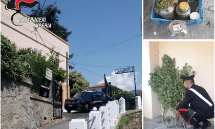 Arrestato un 57enne con 20 piante di canapa