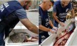 800 kg di pesce sequestrato e 46mila euro di sanzioni: l'operazione della Guardia Costiera