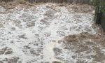 Due persone evacuate a Pigna per le conseguenze delle forti piogge