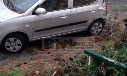 Maltempo: crolla un albero a Nervia, danneggiata un'auto