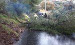 Crolla albero sul Montenero a Bordighera
