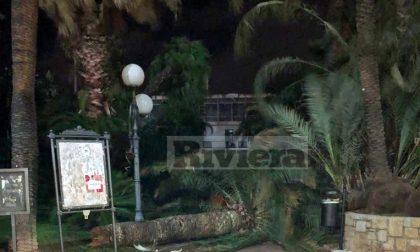 Si spezza una palma al Palazzo del Parco di Bordighera: tragedia sfiorata