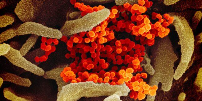 Coronavirus: infondato il collegamento tra il contagiato di Torino e la gara podistica di Portofino