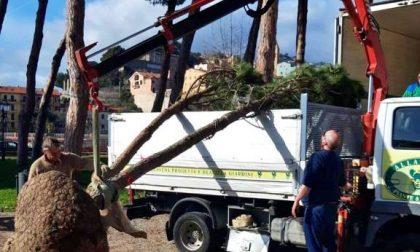 Ventimiglia: Scullino vuole creare una nuova pineta ai giardini