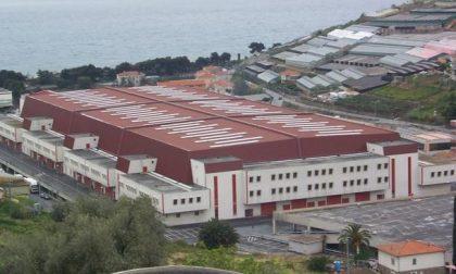 Floricoltura numeri da record al Mercato dei Fiori fatturato da 9 milioni di euro