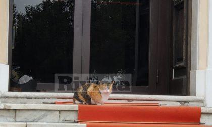 """Coronavirus a Diano marina, in quarantena c'è anche il gatto """"Anca"""""""