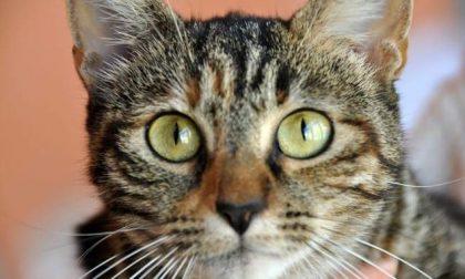 Un gatto decapitato e uno annegato scoperti in una vasca irrigua