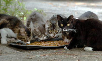 Sanremo investe 600mila euro in un bando per cani e gatti randagi