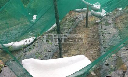 Copiosa grandinata a Pigna: il sindaco, possibili danni agli orti e alle viti