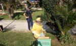 Sciame d'api ai giardini pubblici di Ventimiglia, recintata l'area