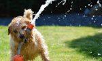 Dieci consigli per proteggere i nostri amici a 4 zampe dal caldo