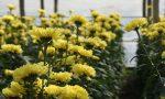 Floricoltura in lutto per la scomparsa di Pier Angelo Melampo