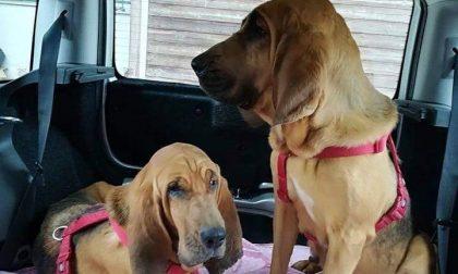 Rubano due cani molecolari a una guardia zoofila. ENPA lancia l'appello su FB