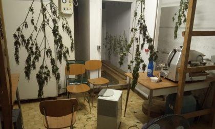 """Polizia arresta 27enne con """"solo"""" 10 Kg di marijuana  in casa"""