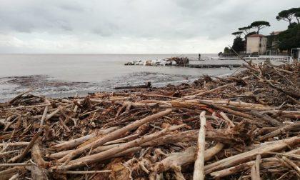 Raccolta della legna sulla spiaggia a Camporosso: ora si può, ma leggete l'ordinanza