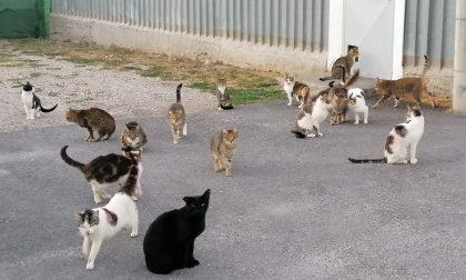 Dramma al gattile di Ventimiglia. L'appello dell'Enpa