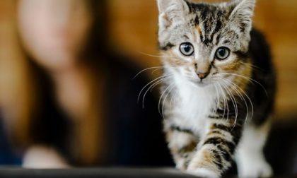 Gattini di pochi giorni avvelenati a Pompeiana