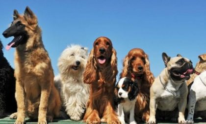 Tutto pronto per il Bordighera Dog Show