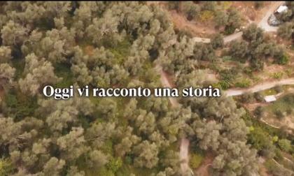 """Ad Imperia in autunno le domeniche si passano a """"sbattere le olive"""", lo spot del Comune"""