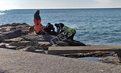 Cade dagli scogli al Porto Vecchio: grave 30enne, allertato l'elicottero. Video