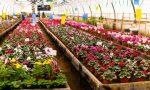 L'Istituto regionale per la Floricultura cerca collaboratori