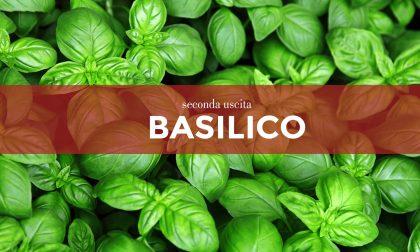 Tutti ortisti: in edicola con La Riviera i semi di basilico