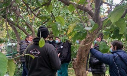 Studenti al lavoro per la riqualifica del giardino della fondazione Ernesto Chiappori